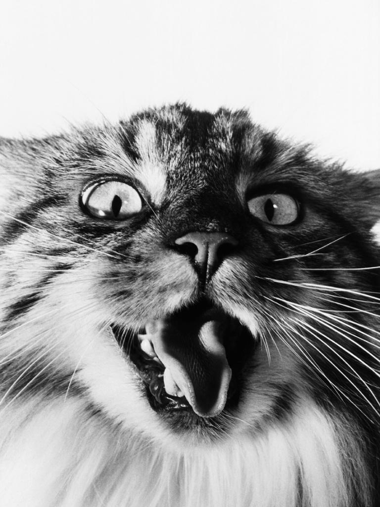 Cat, 1994