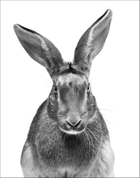 Walter Schels – Tiere