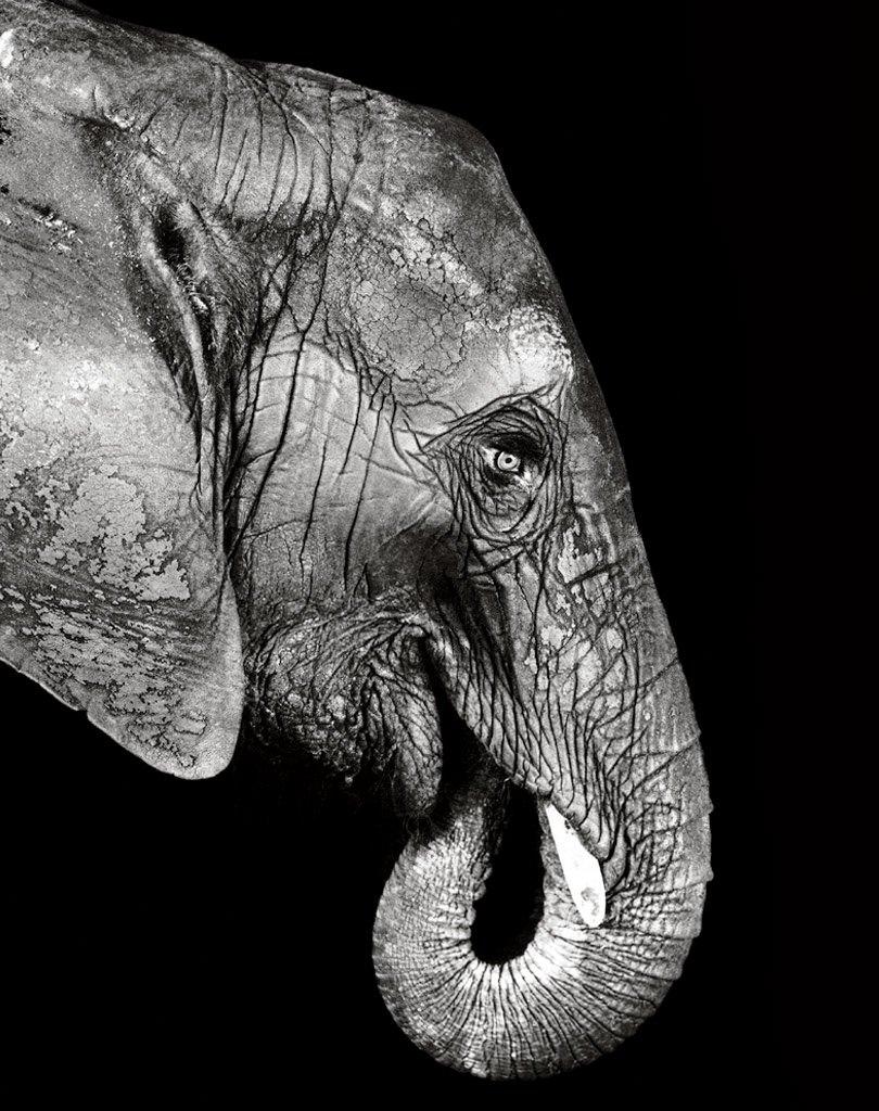 Elefant, 1993