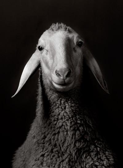 Tierische Porträts